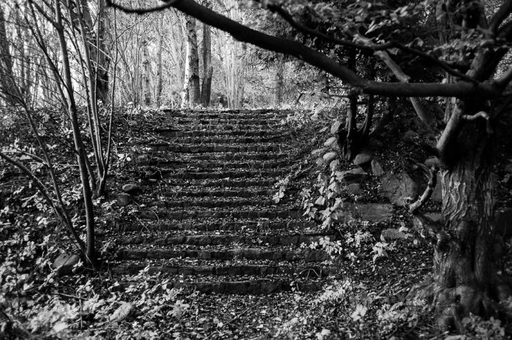 Fototillfälle. Det är sällan jag cyklar på Hisingssidan av älven. Nedanför Angeredsbron finns en övergiven stentrappa i skogen.