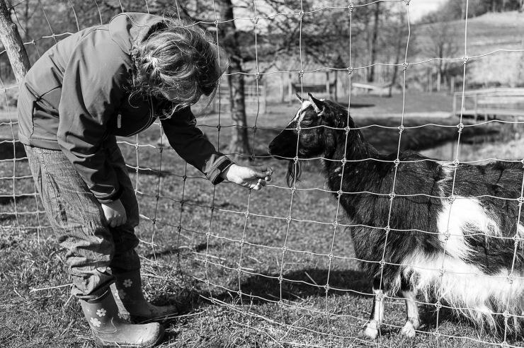 Det är kul att mata djuren.